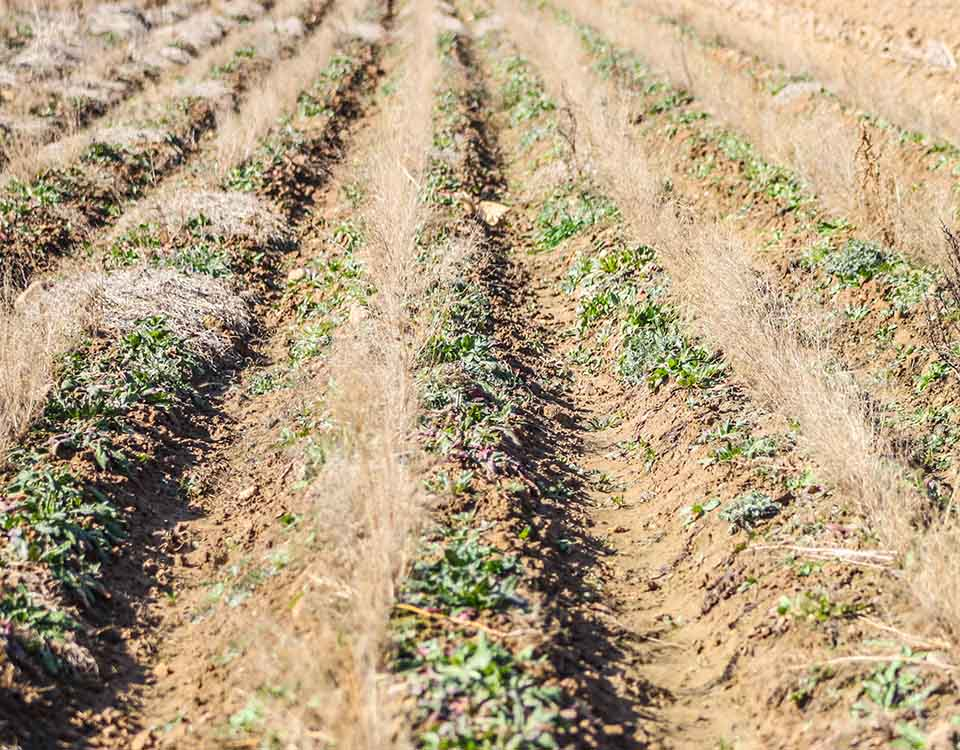 comarca de la campiña de Guadalajara, ideal para la agricultura