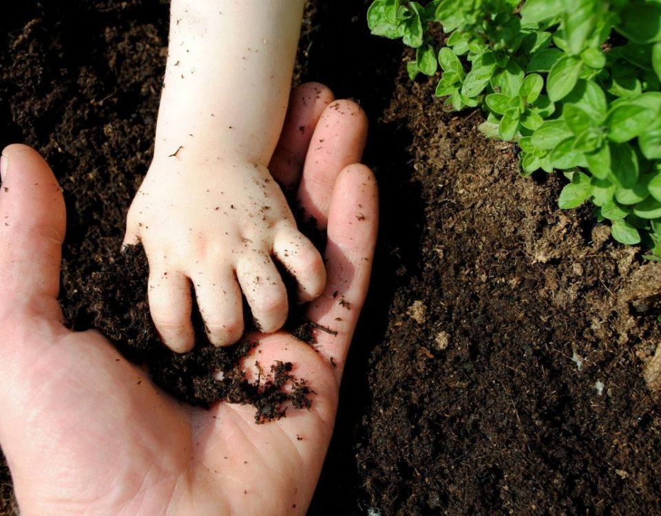 agricultura ecológica en la huerta El Campillo